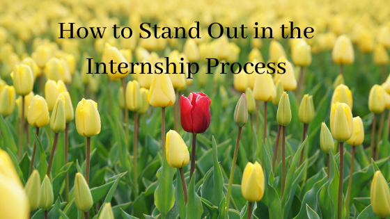 How to Stand Out in the Internship Process